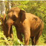 Cambodia - Exotic Diversity