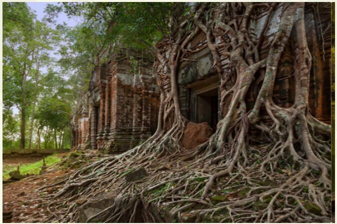 Cambodia - Exotic Diversity 3