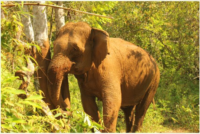 Cambodia – Exotic Diversity