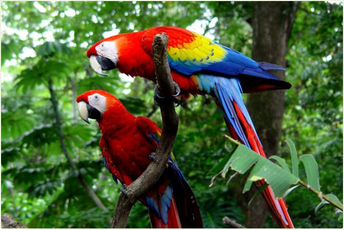 Costa Rica - Volcanoes, Beaches & Impressive Rainforests 2