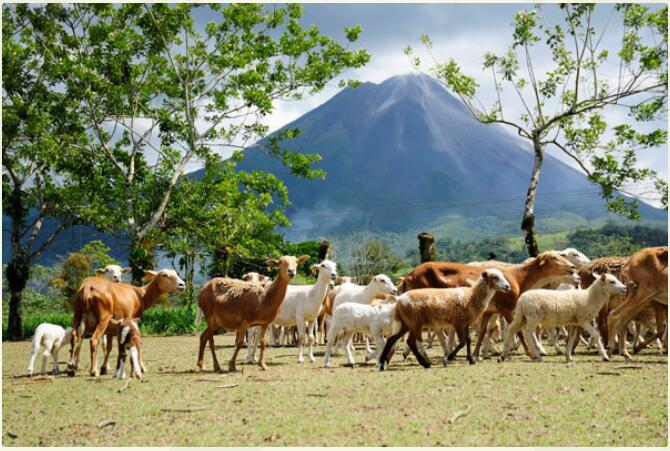 Costa Rica - Volcanoes, Beaches & Impressive Rainforests