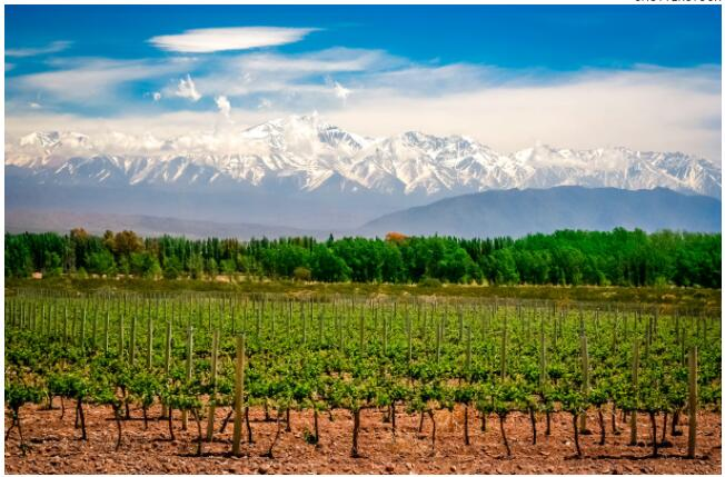 Argentina is a well-known wine destination, with red wines being particularly popular