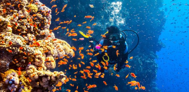 Egypt - diving in the Red Sea