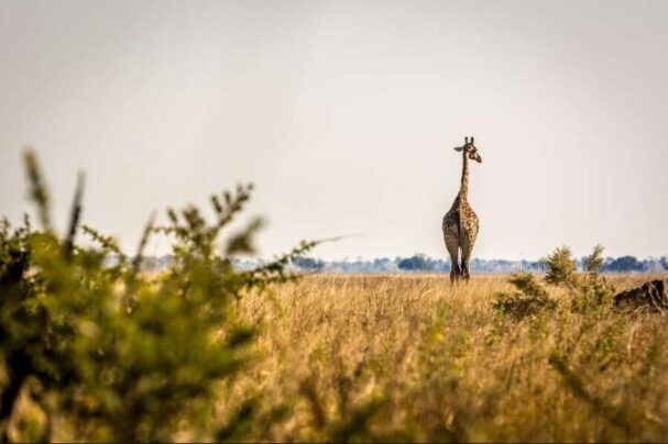 best time to travel to Botswana