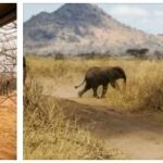 Safari and Nature Trips in Africa